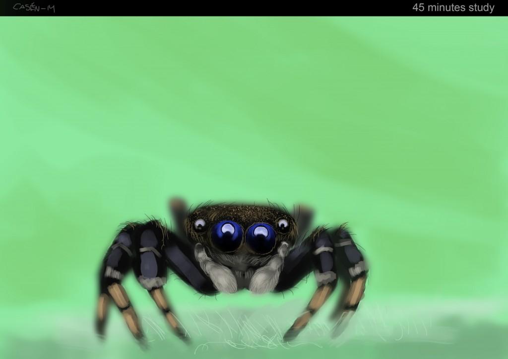 spider_casen_jan_14
