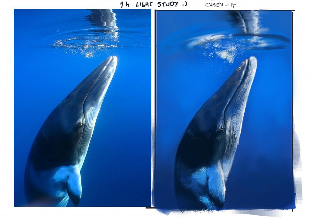 whale_casen_feb_14
