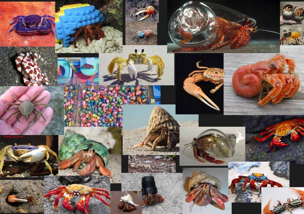 crabs_refs